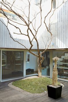 A single crepe myrtle, which sports red blossoms in summer, defines the courtyard of this Korean home.