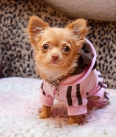Dog Boutique, Designer Dog Clothing and Accessories for your Dog: Contest Winners!