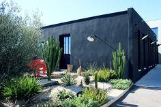 Résidence Galéo - Pôle Immo à Montpellier - Jardin Minéral x Cactus