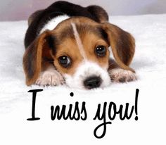 With Tenor, maker of GIF Keyboard, add popular Miss You Guys animated GIFs to your conversations. Share the best GIFs now >>> I Miss You Sister, I Miss You Meme, Cute Miss You, Miss You Funny, Miss You Friend, Missing You Love, Miss You Guys, I Miss You Quotes, I Miss U
