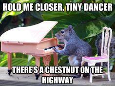 Tiny dancer squirrel