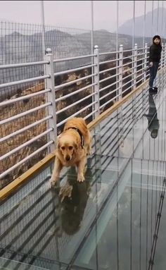 Funny Dog Videos, Funny Animal Memes, Funny Animal Pictures, Cute Funny Dogs, Cute Funny Animals, Animal Antics, Cute Animal Videos, Mundo Animal, Cute Little Animals