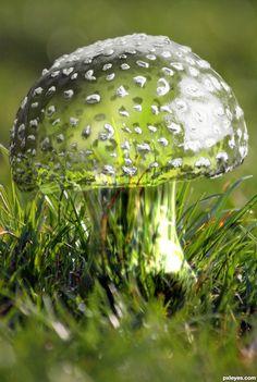 . Garden Mushrooms, Glass Mushrooms, Plant Fungus, Mushroom Fungi, Wonders Of The World, Glass Art, Christmas Bulbs, Stuffed Mushrooms, Holiday Decor