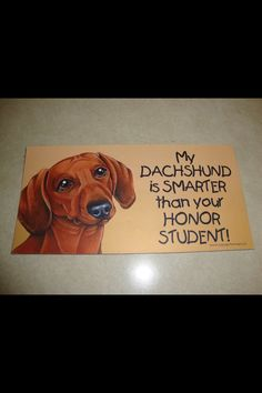 Lol dachshunds are smart