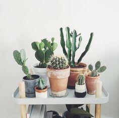 Beautiful cactus family!
