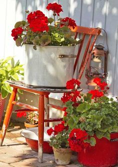A variety of Geraniums have been planted already in my back courtyard! I like the colour combo here with the red chair and also the different pots. Cute!