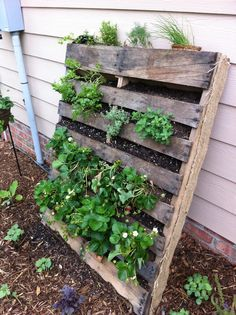 Pallet Gardening - works best if you plant them close together, and prop it on a tilt (even more so than the photo to the right). I would recommend the hanging pocket method vs the staple the hell out of landscaping fabric to the back because the other method may keep the dirt in place better.