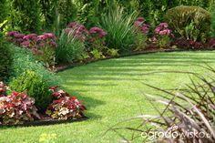 Ogród mały, ale pojemny;) - strona 43 - Forum ogrodnicze - Ogrodowisko