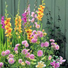 How to plant and care for summer bulbs - Sunset. How to plant and care for summer bulbs - Sunset. Summer Flowering Bulbs, Summer Bulbs, Beautiful Gardens, Beautiful Flowers, Outdoor Table Settings, Growing Gardens, Garden Bulbs, Home Garden Design, Backyard Farming