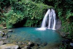 Saute de la Lezarde -- waterfall in Guadeloupe, FWI where hubby grew up ... he would jump off the top into the pool