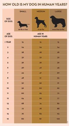 Your Dog's Age In Human Years: A Conversion Chart Your Dog's Age In Human Years: A Conversion Chart Dog years calculator infographic All Dogs, Dogs And Puppies, Puppies Stuff, Puppies Tips, Chien Jack Russel, Jack Russell Dogs, Dog Ages, Dog Information, Info Dog