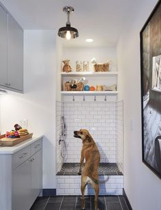 5 Benefits Of Having A Dog Wash Station In Your Home // You can have shelves surrounding them keeping all the shampoos, treatments and snacks easily within reach.