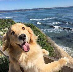 Un chien voit son paradis