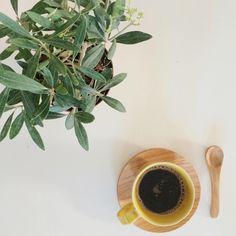 O meu novo amor, Esta oliveira. Terá muito que crescer até ter tamanho para a passar para o jardim.  Bom dia!  #omeucafédamanha #morningscenes #onthetable #olivetree #andreiabchome   5.4.16