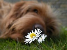 80 plantas tóxicas para o consumo em animais