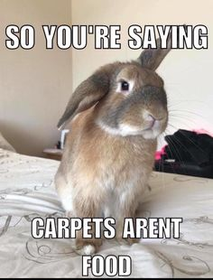 Animal Jokes, Funny Animal Memes, Funny Animal Pictures, Cute Little Animals, Cute Funny Animals, Funny Cute, Pet Bunny Rabbits, Pet Rabbit, Cute Baby Bunnies