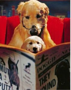 cute dogs with books, dogs reading
