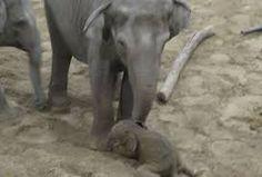baby q olifant - Google zoeken