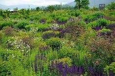 Tokachi Millennium Forest Hokkaido Japan Dan Pearson Garden Fencing, Garden Landscaping, Plant Design, Garden Design, Dan Pearson, Garden Architecture, Natural Garden, Salvia, Garden Inspiration