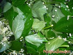 Plant Leaves, Herbs, Plants, Balcony, Lawn And Garden, Herb, Plant, Planets, Medicinal Plants