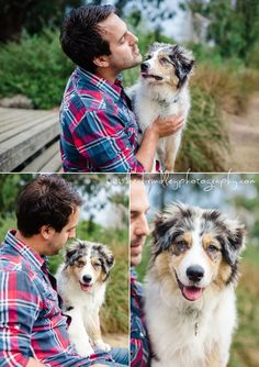 Aussie Shepherd Aussie Shepherd, Dog Photography, Little Star, Dads, Couple Photos, Parents, Australian Shepherds, Couple Photography, Fathers