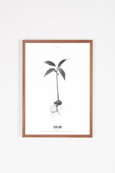 Poster Grow Avocado