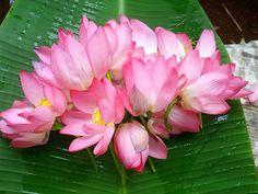 todays offering lotus
