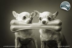Loose Leashes by Ron Schmidt - PIP and SQUEAK (CHIHUAHUA)