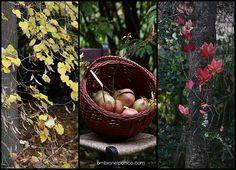 autunno in giardino