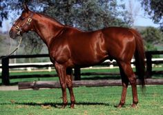 Crimson Satan: Champion 2 y.o. 1961. Winning over $790k, this Spy Song son is the damsire of Terlingua, Storm Cat's dam.  Buried at his birthplace on Crimson King Farm in KY.