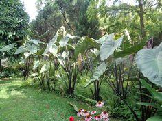 Heller Garden - Gardone Riviera