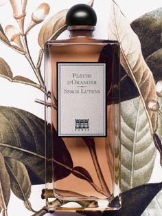 Serge Lutens Fleurs d'Oranger - orange blossom white jasmine Indian tuberose white rose citrus peel hibiscus seeds cumin and nutmeg Perfume Scents, Perfume Bottles, Design Set, Artist Makeup, Perfume Packaging, Cosmetics & Perfume, Beautiful Perfume, Perfume Collection, Orange Blossom