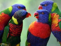 I'm not much into birds, but these are very pretty.