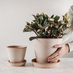 """Milánóban 1960-ban, amikor Ninetta Mariani tervező megalkotta a 'Julie' névre hallgató virágcserép formát, felkiáltott: """"Nem tudtam mást hozzátenni!"""" Maximálisan egyetértünk vele a mai napig. Ez az elegáns, vonalaival háttérben maradó cserép a növényt tartja fókuszban."""