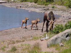 isle royale national park   Isle Royale National Park Reviews - Houghton, Michigan - Gogobot