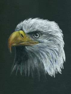 """Bald Eagle"" (Colored pencil on black paper) By Kristee Mays"