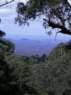 Take in the beauty of #nature in the Blue Mountains of #Australia. The Blue Mountains can be explored on a day trip from #Sydney.