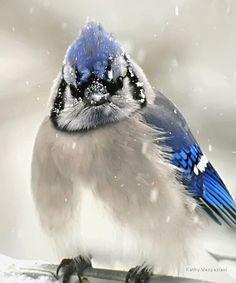 ~~Blue jay in snow by Kathy Vespaziani~~