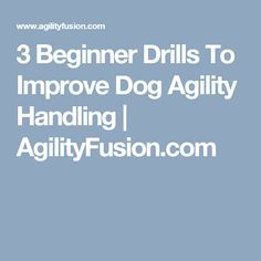 3 Beginner Drills To Improve Dog Agility Handling | AgilityFusion.com