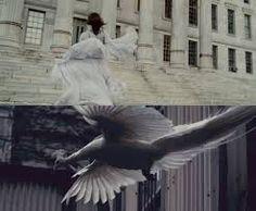 I origins...white peacock scene