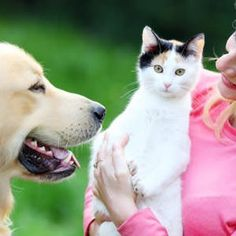 Here are the nine most common summer dangers for pets, along with tips for how you cankeep your animal safe this summer. Summer has long been a time for vacations, cookouts and pool parties. When the heat turns up, the dangers to pets increase too. To keep your dog, cat ...