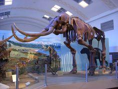 Natural History Museum of Utah--salt lake city, utah
