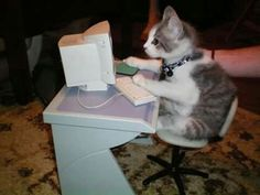 Cat with a computer