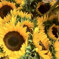 Such happy flowers - they make me happy.  I am planting my sunflower garden this next week.