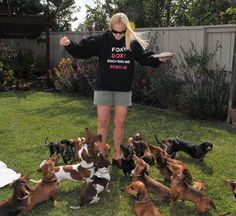 Foxy Doxy Dachshund Rescue. Looks like heaven to me!!! / How to train a Dachshund http://tipsfordogs.info/90dogtrainingtips