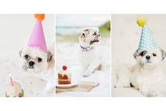 Happy Birthday Coco Bean! | © Chic Sprinkles #shihtzu #dog #birthday