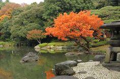 Những điểm du lịch hấp dẫn nhất tại Tokyo vào mùa thu