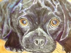 8x10 oil painting of black puggle