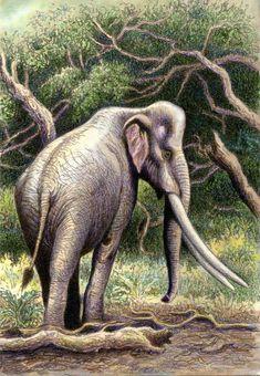 Palaeoloxodon (mamífero proboscídeo del Pleistoceno de Eurasia, 0,5Ma) (Willem van der Merwe)