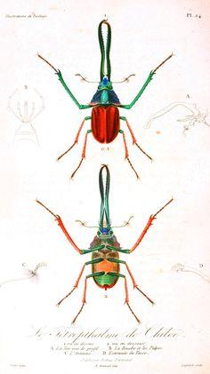 Illustrations de Zoologie.    Via http://vintageprintable.com/wordpress/?page_id=13821